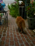 "Cat walking on ""bricks"""